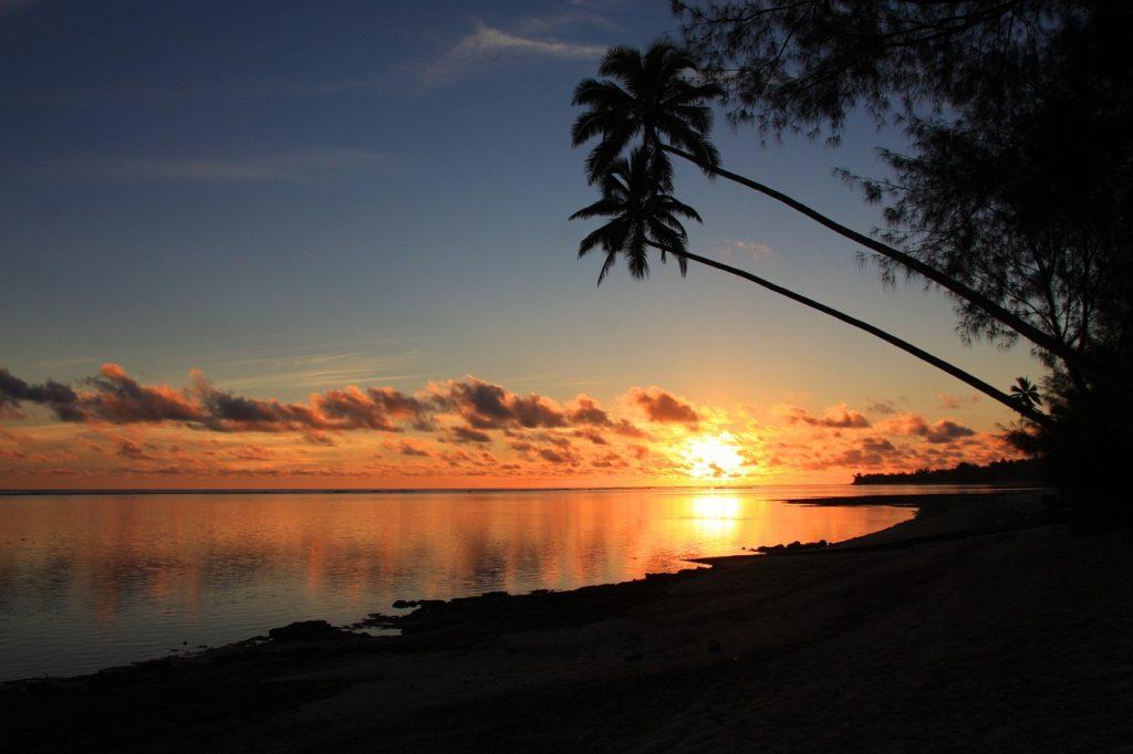 rarotonga sunset coconut palms